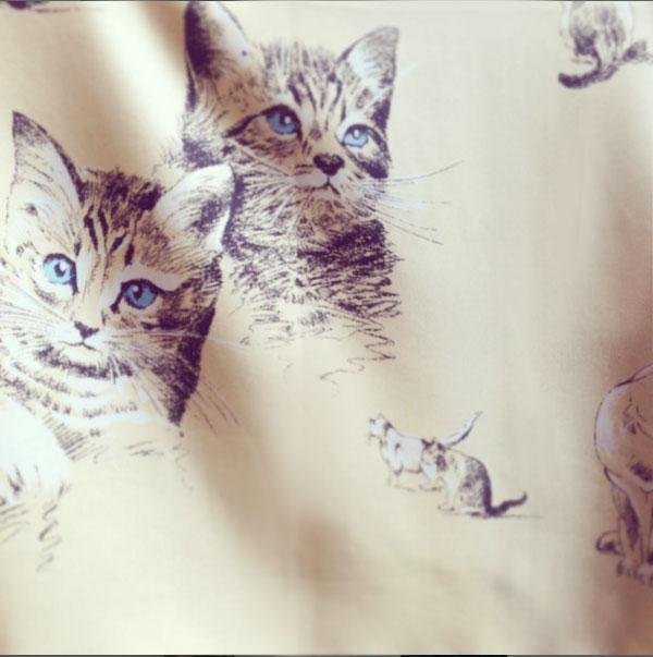 MANIPURI_Cats_